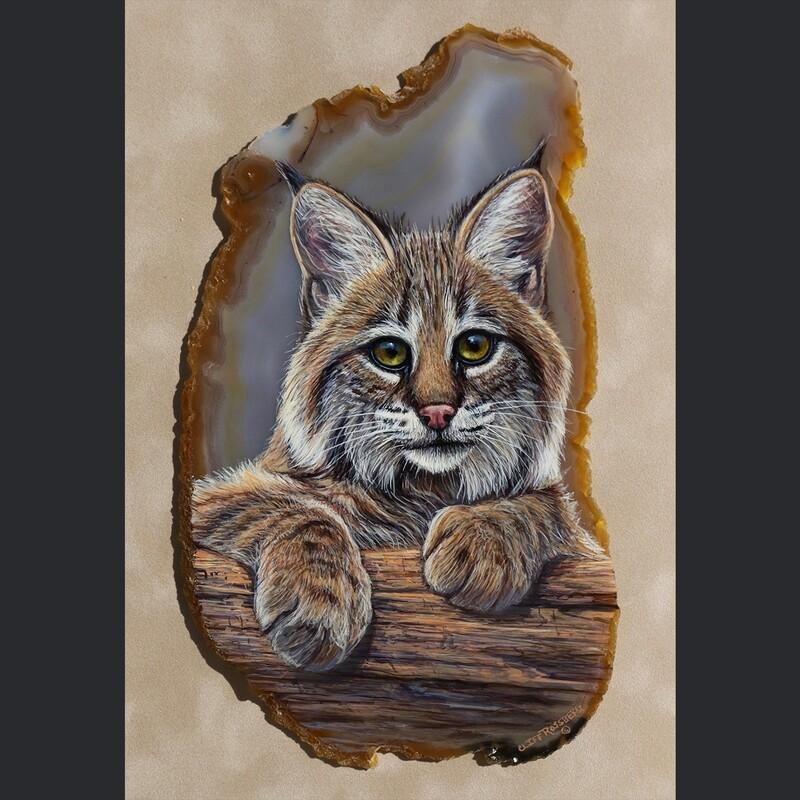 Little Bobby- Bobcat