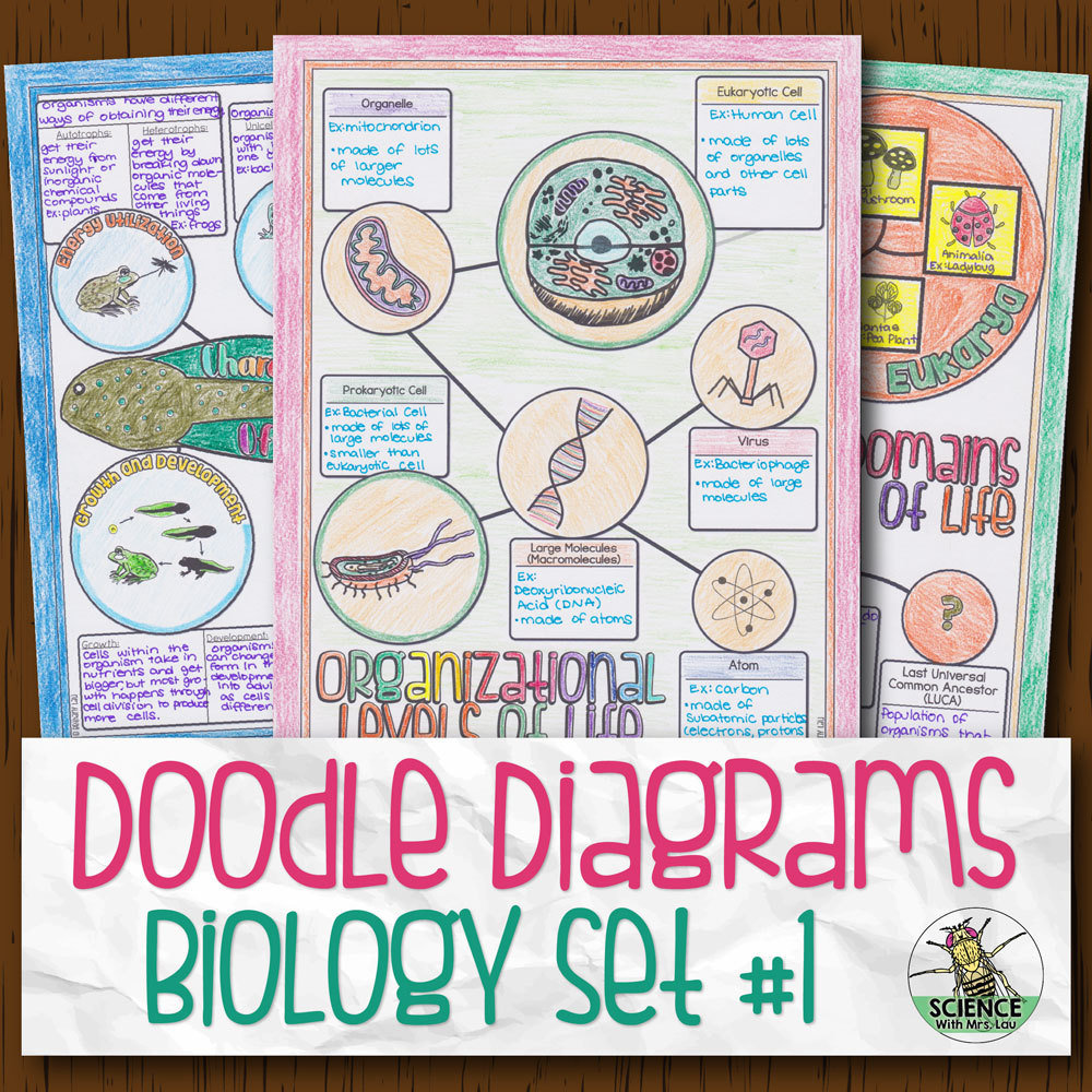 Biology Doodle Diagrams Bundle