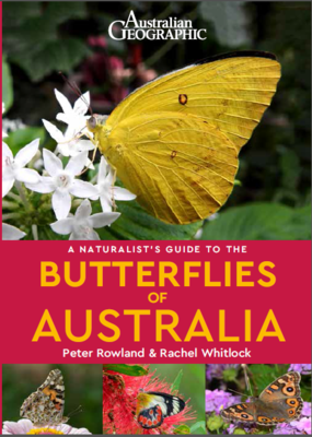 Naturalist's Guide to Butterflies of Australia (Australian Geographic) [Due August 2020 - ADVANCED ORDERS ONLY]