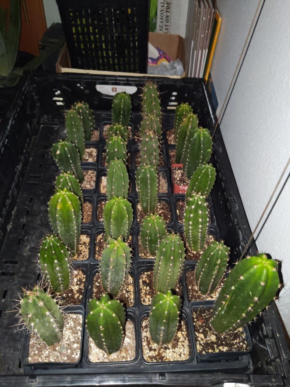 Misc misplant hybrids