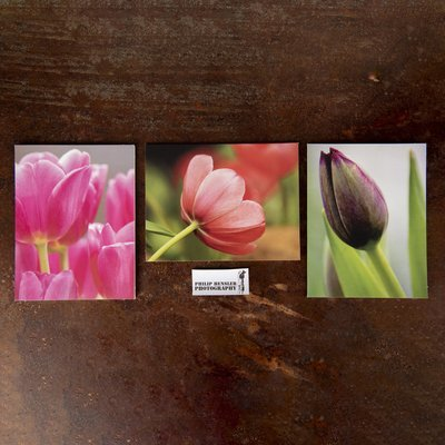Tulip Card Pack