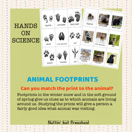Animal Footprint Matching Cards