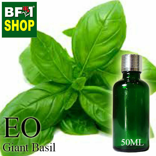 Essential Oil - Basil - Sweet Basil ( Giant Basil ) - 50ml