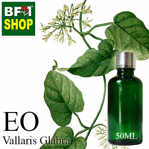 Essentail Oil - Vallaris Glabra - 50ml