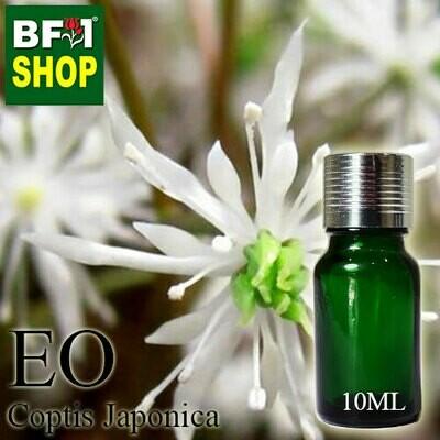 Essential Oil - Coptis (Coptis Japonica) - 10ml