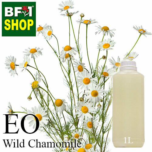 Essential Oil - Chamomile - Wild Chamomile - 1L