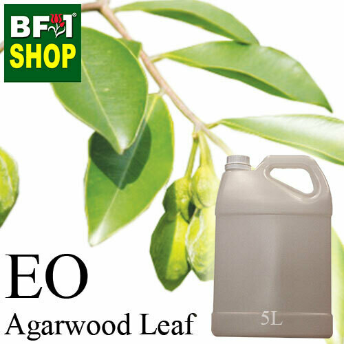 Essential Oil - Agarwood Leaf - 5L