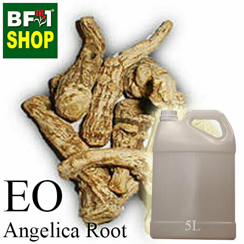 Essential Oil - Angelica Root - 5L