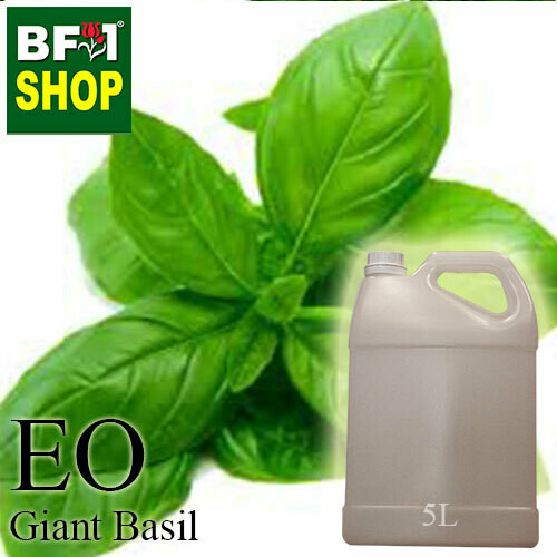 Essential Oil - Basil - Sweet Basil ( Giant Basil ) - 5L