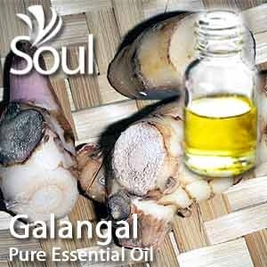 Pure Essential Oil - Galangal Oil