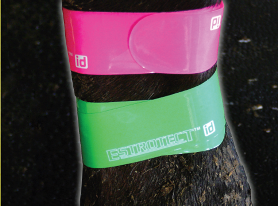 ESTROTECT™ID Bands (30)