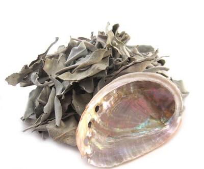 White Loose Sage + Abalone Shell (Mini)