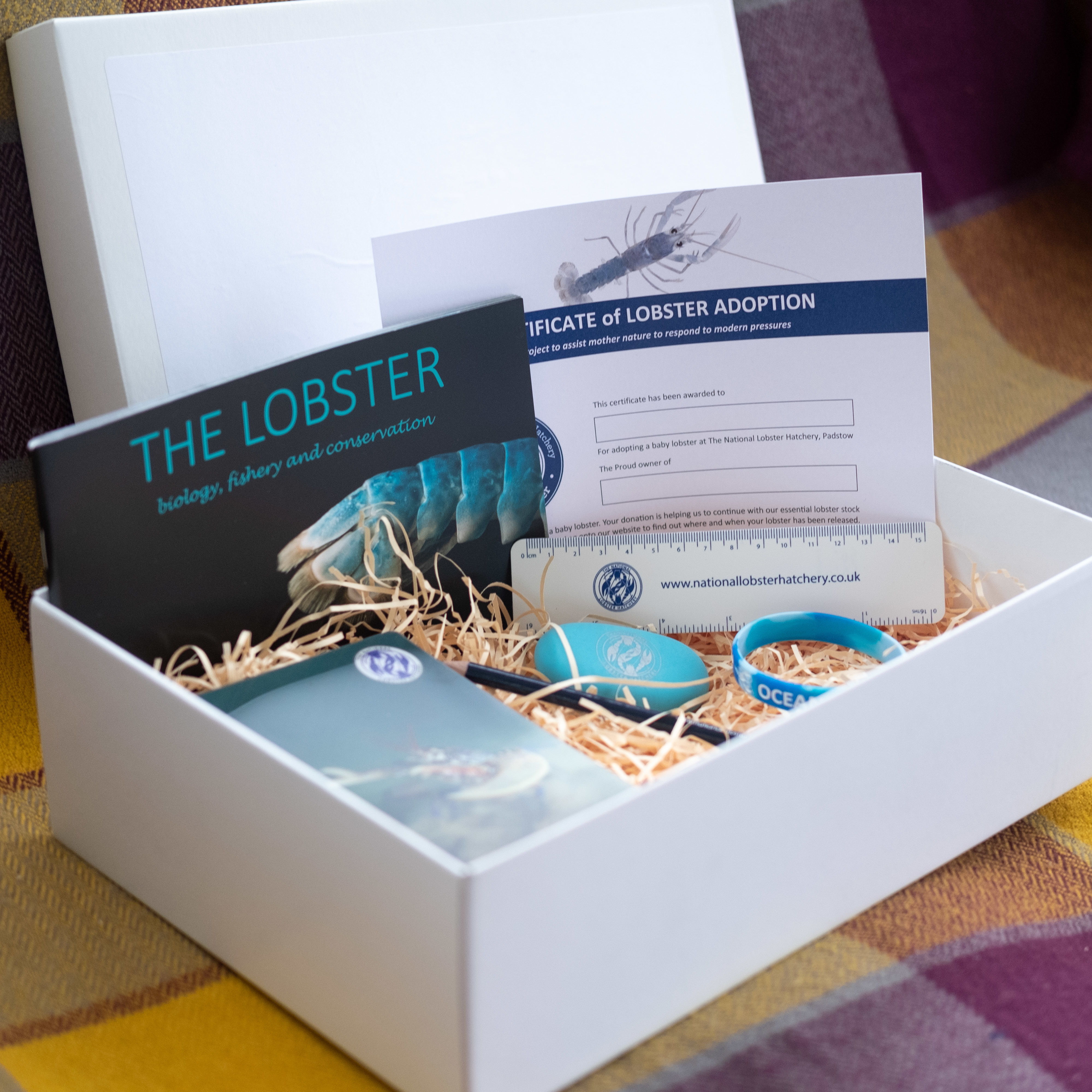 Adopt a Lobster Gift Pack with stationary set. 00355