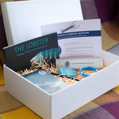 Adopt a Lobster Gift Pack with stationery set