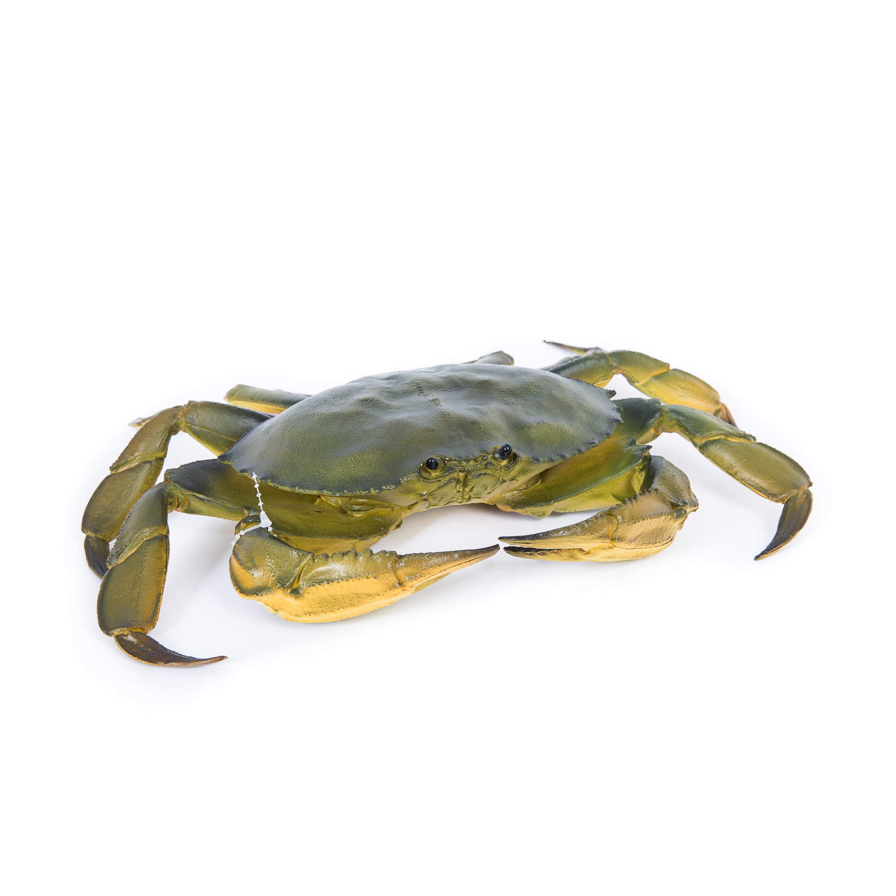 Lifelike Edible Crab 31cm