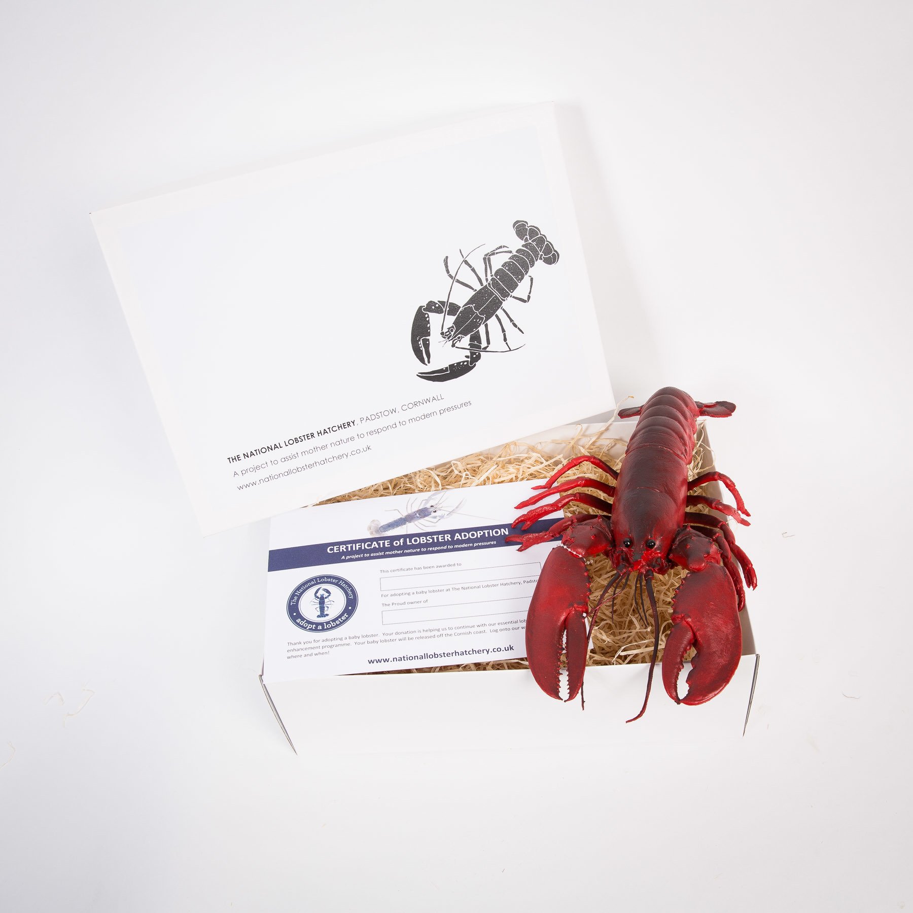 Adopt a Lobster Gift Pack with Snappy the lifelike rubber lobster 00181