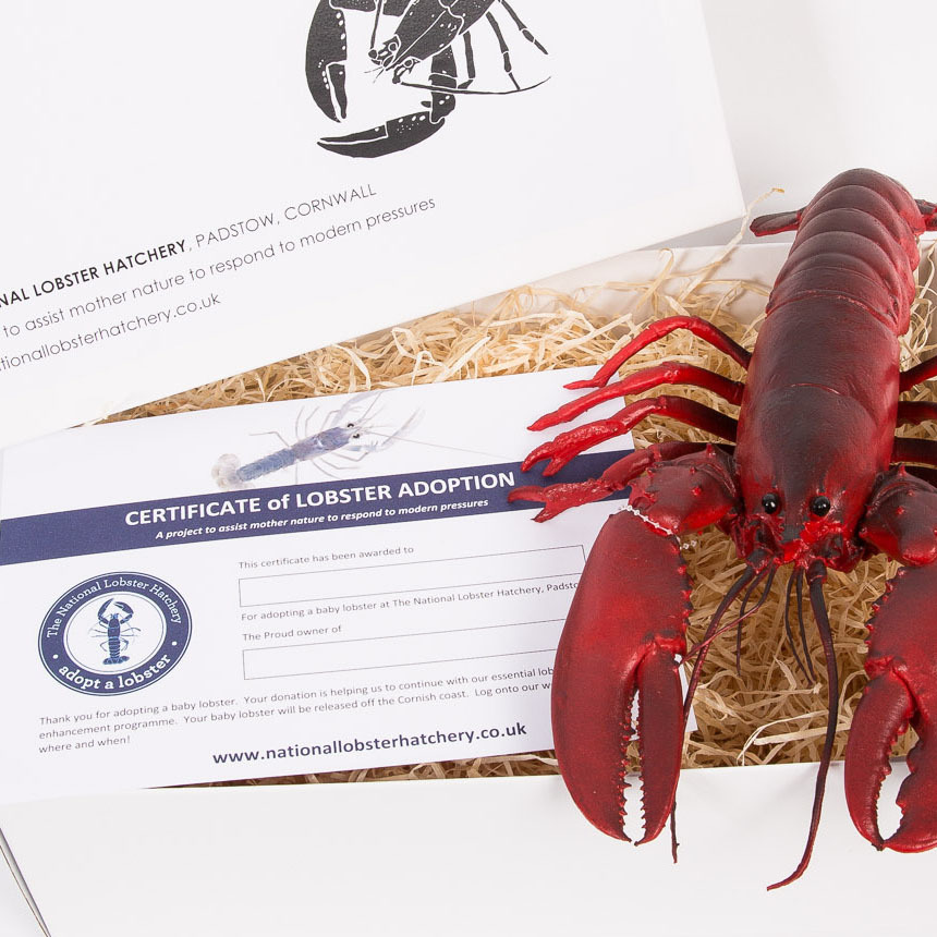 Adopt a Lobster Gift Pack with Snappy the lifelike rubber lobster