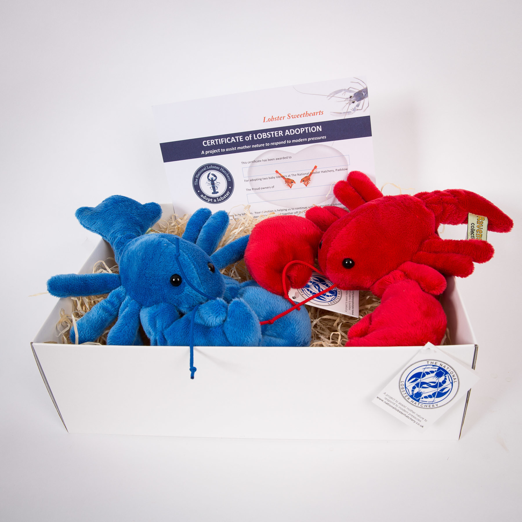 Adopt a Lobster Sweethearts Gift Pack with a red & blue fluffy lobster 00249