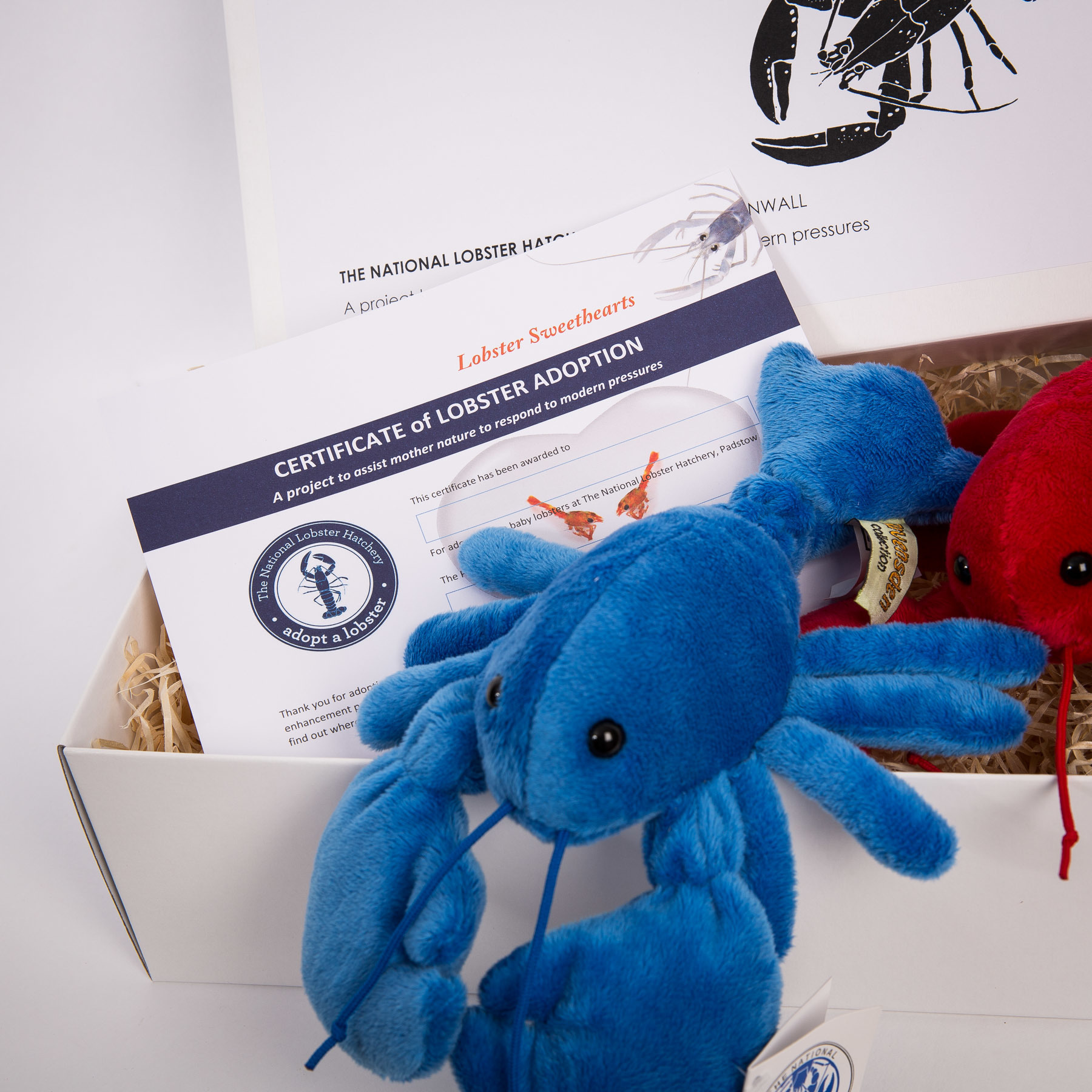 Adopt a Lobster Sweethearts Gift Pack with a red & blue fluffy lobster
