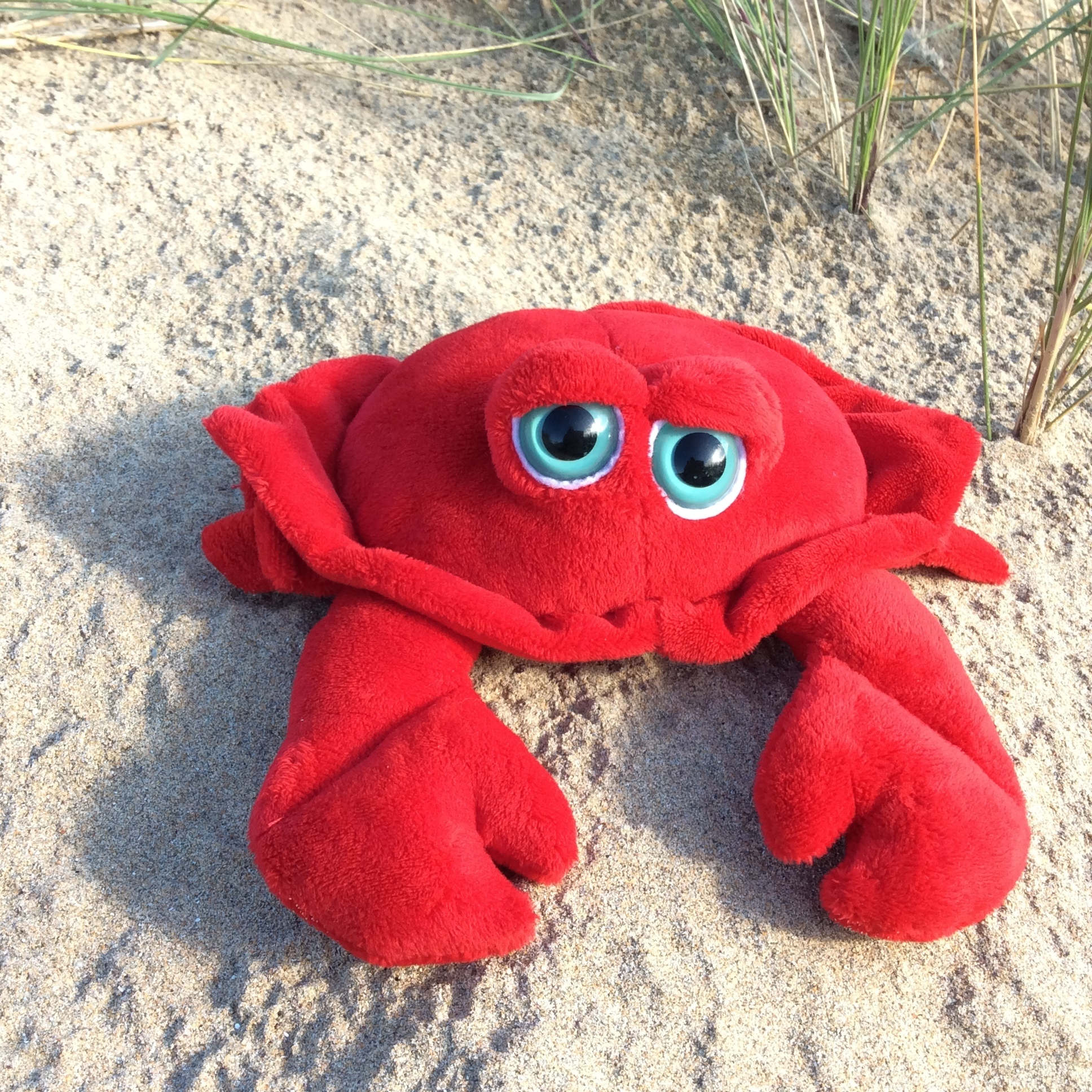 Bright Eye Crab 00111