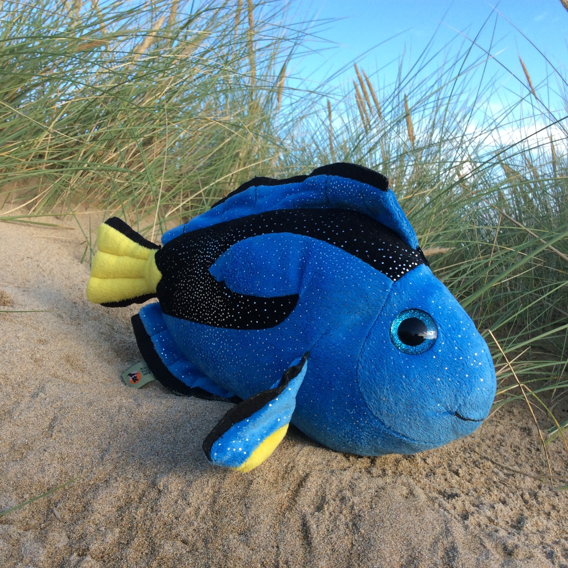 Finding Dory the Regal Blue Tang 00228