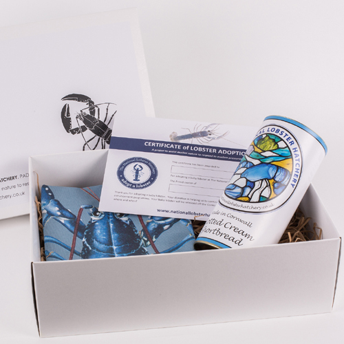 Adopt a Lobster Gift Pack with Clotted Cream Shortbread & Lobster Lifecycle T-Towel 00283