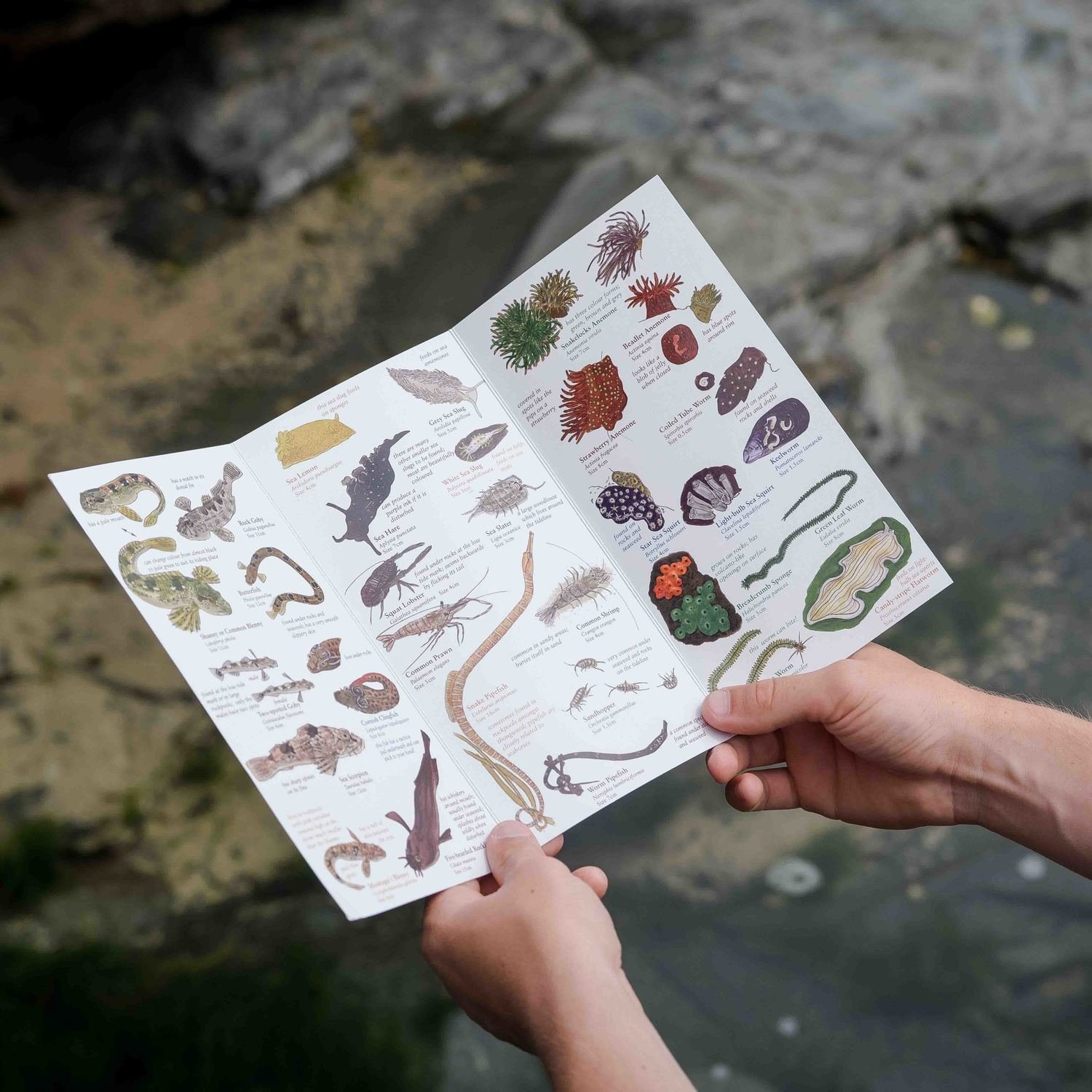 The Rockpool Guide