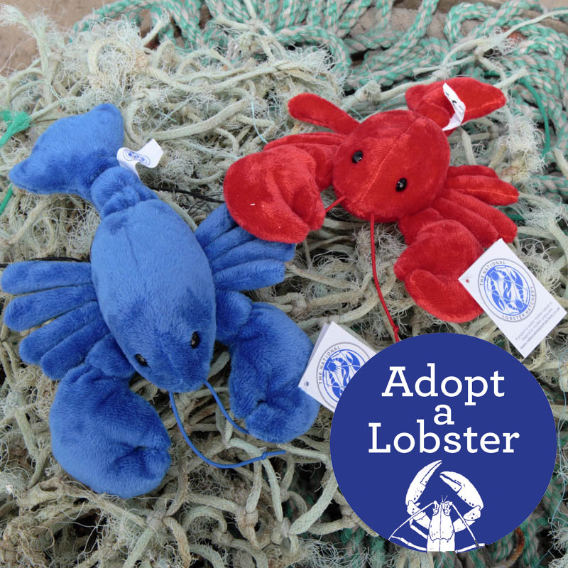 Secret Valentine - Adopt a Lobster & Fluffy Lobster 00338