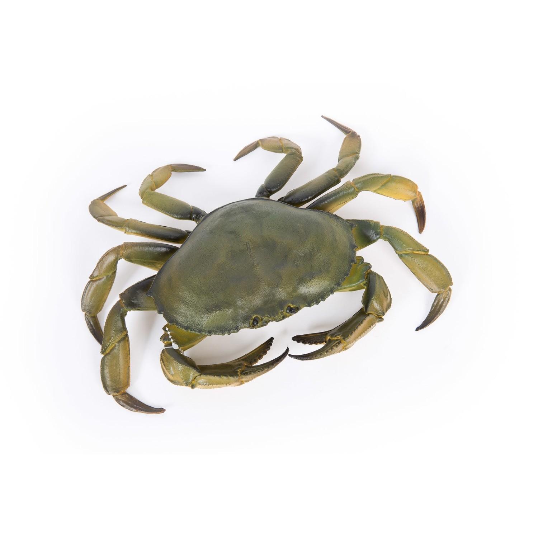 Lifelike Edible Crab 31cm