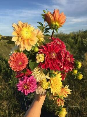 Add-On Potted Dahlias Grow-Your-Own Cut Flower Garden