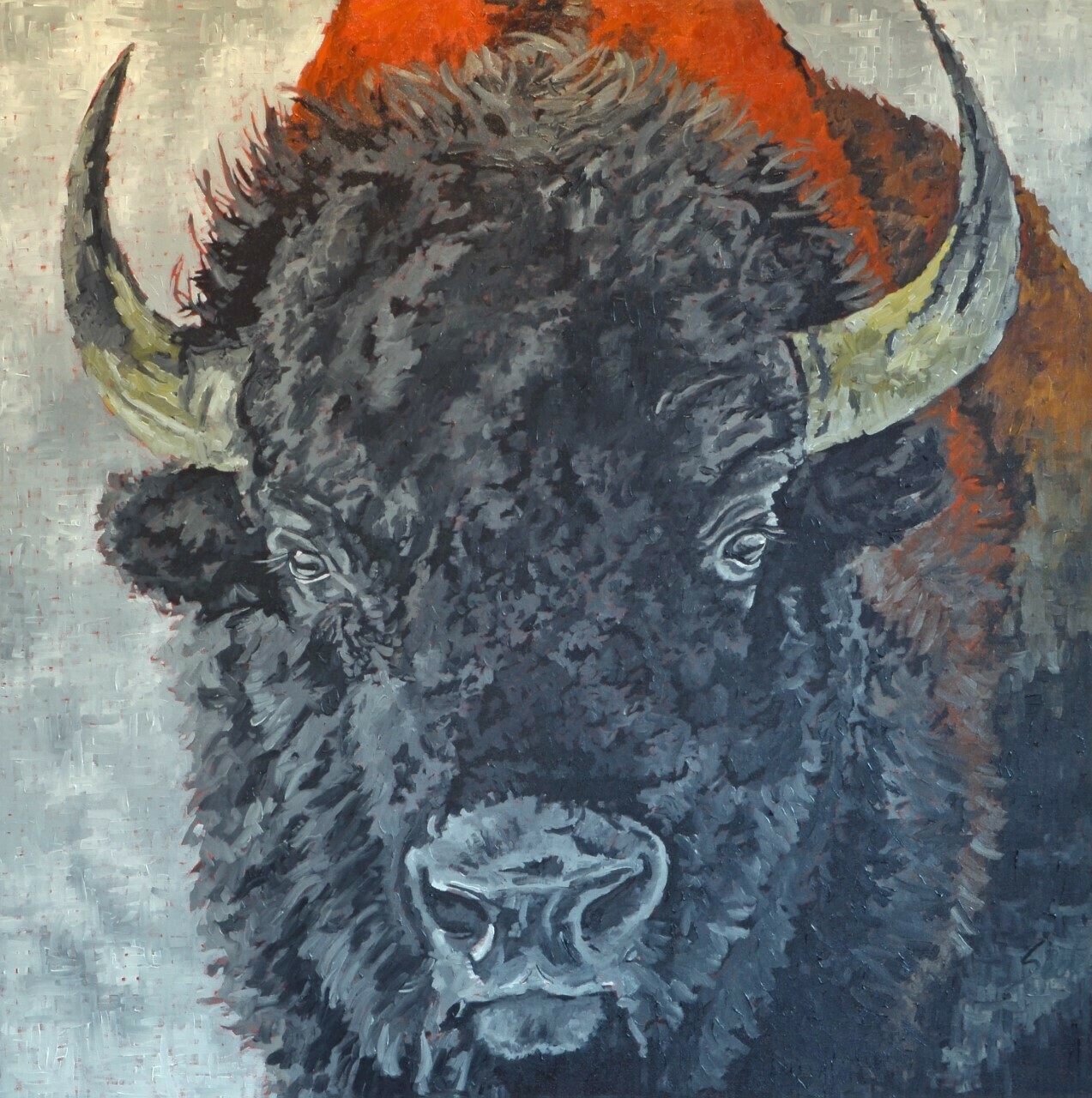 Bison 1, oil on canvas, 48x48