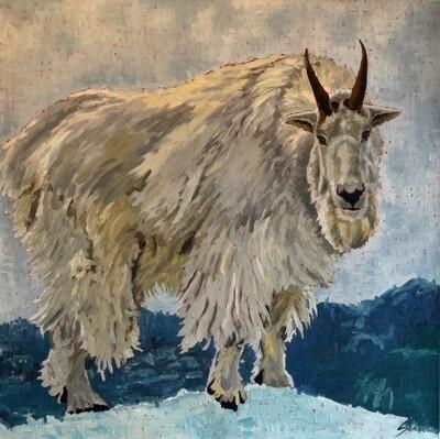 Mountain Goat, oil on canvas, 36x36