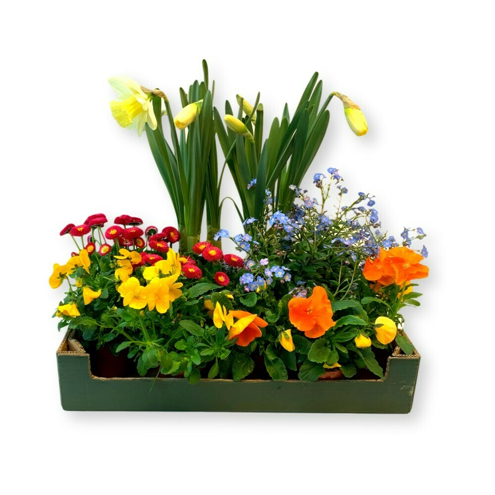 Frühlingsbox 'bunt'