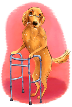 Seminar- Senior Dog 0003