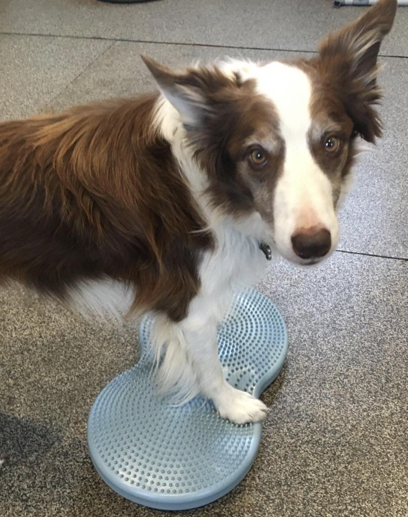 Seminar- Canine Cross Fit 00005