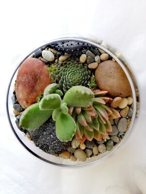 Small Fishbowl Terrarium