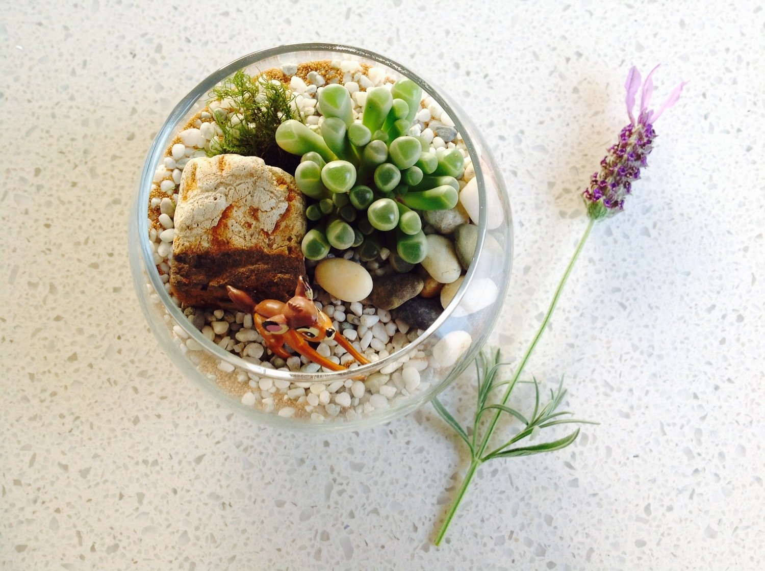 Tiny Fishbowl Terrarium