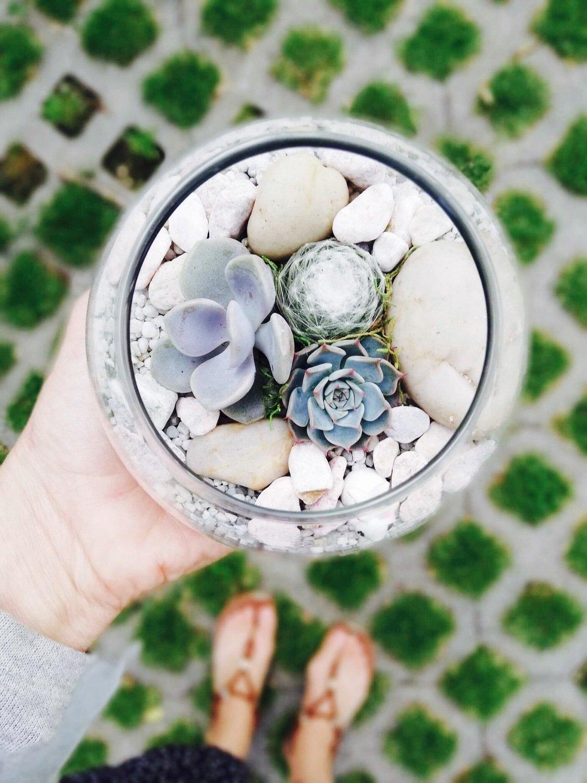Mini Fishbowl Terrarium