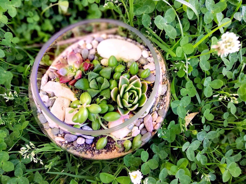Medium Fishbowl Terrarium