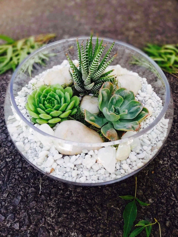 Low Bowl Terrarium-minimalist