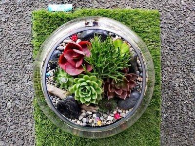 XXL Fishbowl Terrarium