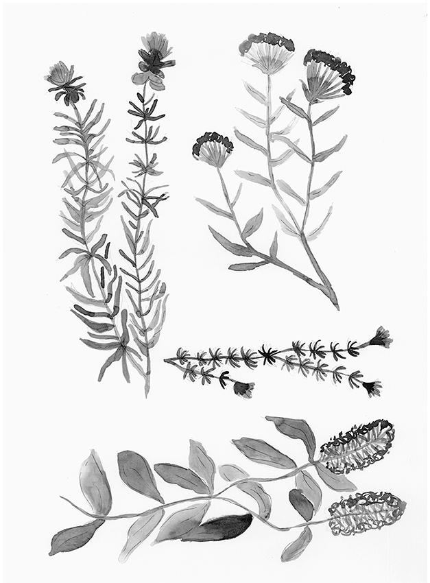 Botánica 5 00004