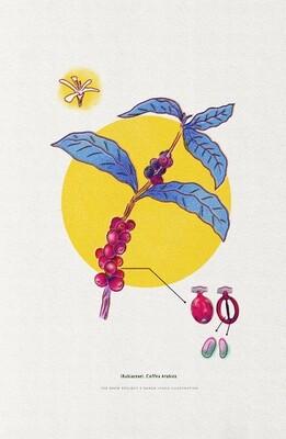 Coffea Arabica Print // Wall Art