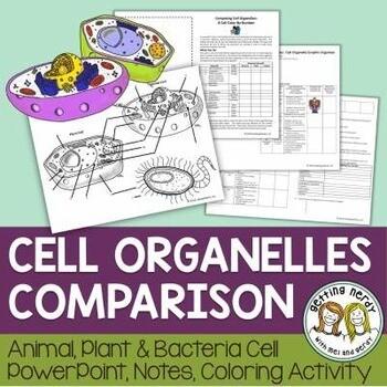 Plant, Animal, & Bacteria Cells Comparison - Organelle Structure & Function