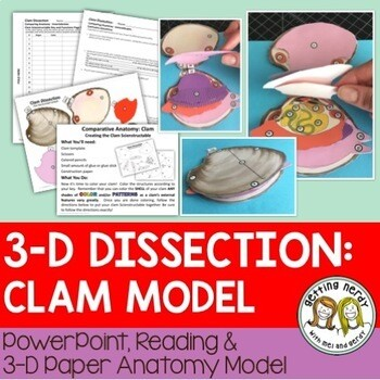 Clam Paper Dissection - Scienstructable 3D Dissection Model