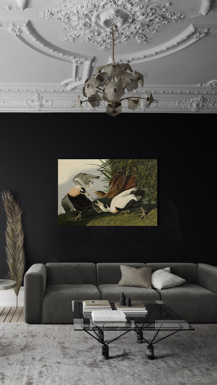 Eider Duck. John James Audubon. 3д картина.