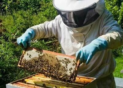 Miel de fleurs - 1kg