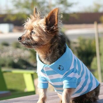 Striped Dog Polo - Blue and White