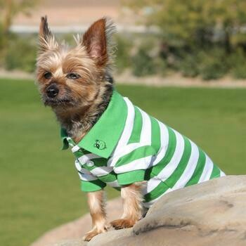 Striped Dog Polo - Green and White