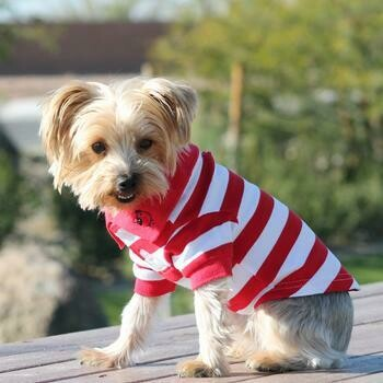 Striped Dog Polo - Red and White